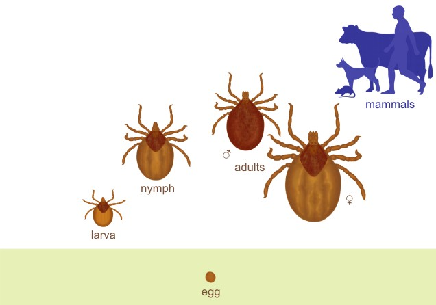 Prev 978 3 941279 58 2 04 moreover Tickboxtcs furthermore What Are The Labels For Minor Ticks In A Log Scale Graph together with 14245831822 additionally 410812797229385754. on ticks